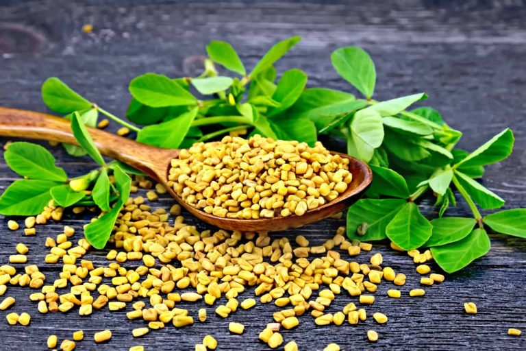 Fenugreek May Lower Blood Sugar Levels
