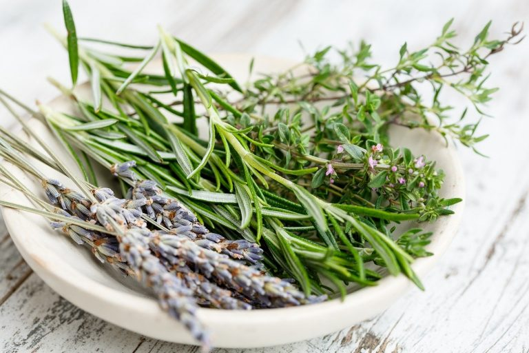 Rosemary is Ready to Boost Your Memory